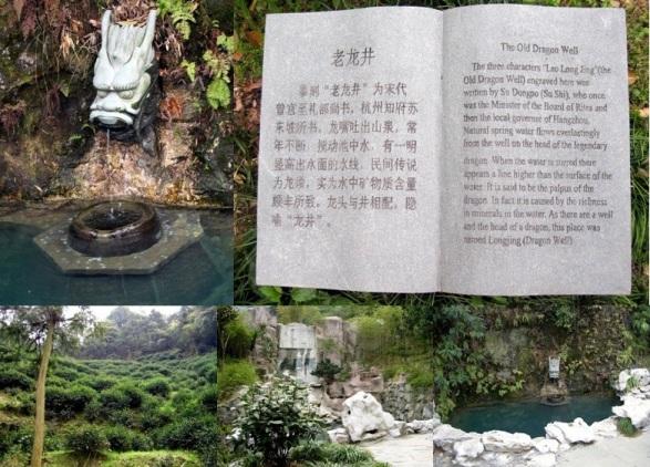 Original Long Jing Dragonwell near Hangzhou, Zhejiang province