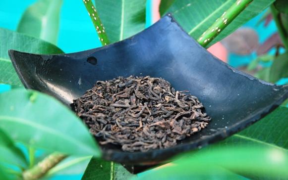 Gereifter Lincang Pu Erh Tee in meinem Garten