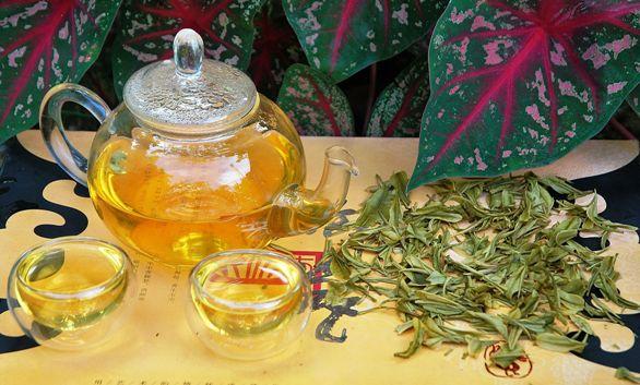 Anji Bai Cha Green Tea / Anji White Tea in my garden