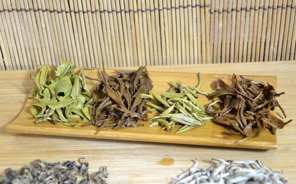 Four Vietnamese Snow Shan teas: Snow Shan green tea, Snow Shan black tea, Snow Shan White Silver Needle Tea, Snow Shan Tra Pai Hao Tea - wet tea leaves