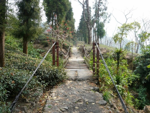 Adventurous suspension brigdge granting access to Jungpana tea estate