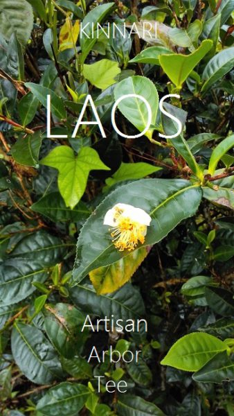Artisan arbor teas from Xiengkhouang and Bolaven Plateau, Laos