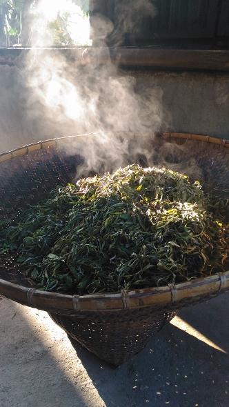 Tea processing at Xiengkhouang, Laos